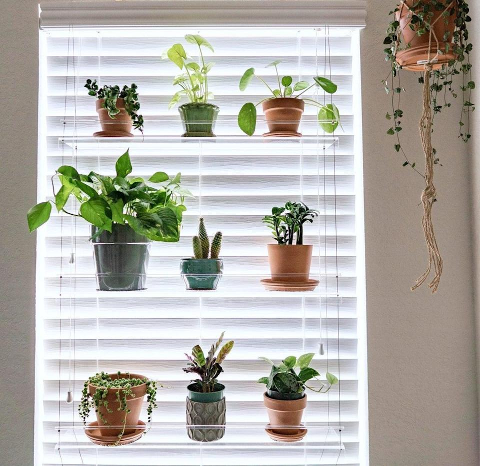 "<h3><a href=""https://www.etsy.com/listing/130803004/window-plant-shelf-hanging-shelf-plant"" rel=""nofollow noopener"" target=""_blank"" data-ylk=""slk:Etsy Window Hanging Plant Shelf"" class=""link rapid-noclick-resp"">Etsy Window Hanging Plant Shelf</a></h3><br><strong>When you don't have a window sill to plant an apartment garden on</strong>: Try taking those green friends to your sun-soaked windows with this sweet acrylic hanging system that looks as if it's suspended in sunshine.<br><br><strong>IndoorWindowGardens</strong> Window Hanging Plant Shelf, $, available at <a href=""https://go.skimresources.com/?id=30283X879131&url=https%3A%2F%2Fwww.etsy.com%2Flisting%2F130803004%2Fwindow-plant-shelf-hanging-shelf-plant"" rel=""nofollow noopener"" target=""_blank"" data-ylk=""slk:Etsy"" class=""link rapid-noclick-resp"">Etsy</a>"