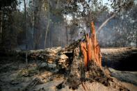 A tree burns while Brazilian Institute for the Environment and Renewable Natural Resources (IBAMA) fire brigade members attempt to control hot points in a tract of the Amazon jungle near Apui