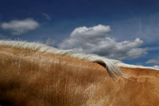 A palomino horse's mane is seen against the sky at Spancil Hill horse fair in Spancil Hill, Ireland June 23, 2018. REUTERS/Clodagh Kilcoyne TPX IMAGES OF THE DAY