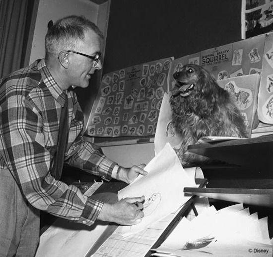 In the Disney studio during the production of 'The Lady and the Tramp'. Photo: Disney