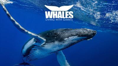 """Clearwater Marine Aquarium is set to open a new exhibit """"Whales: Living with Giants"""" on March 21."""