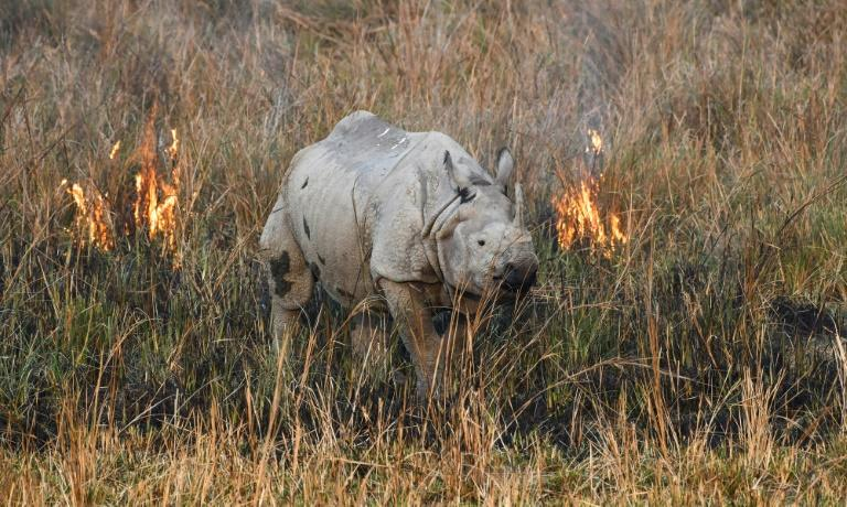 Highly prized rhino horns have caused the species to become common prey for poachers (AFP Photo/Biju BORO)
