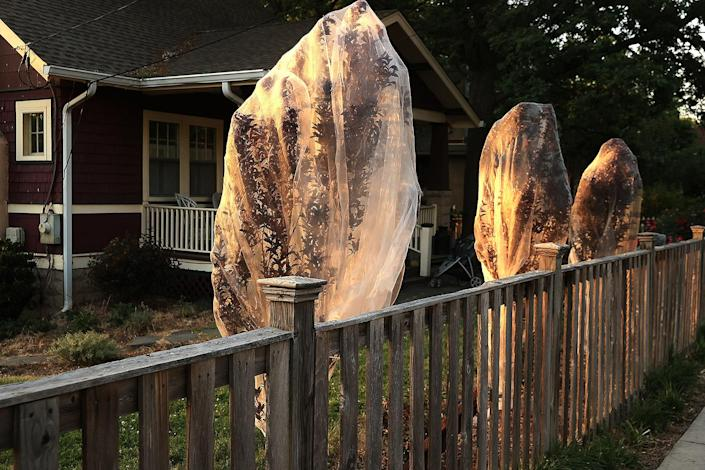 <p>In Takoma Park, Maryland, young trees are getting covered in netting to prevent them from getting damaged by cicadas laying their eggs on them.</p>