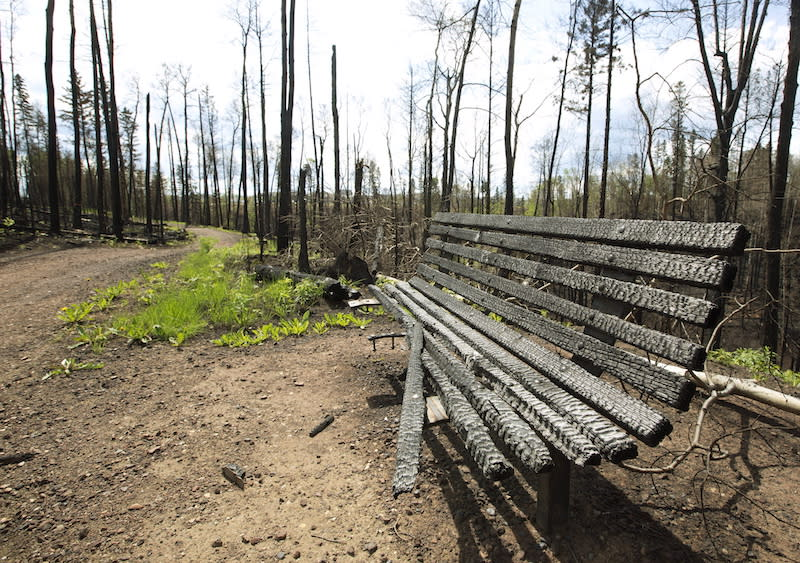 <p>A park bench sits burnt in a park in the Timberlea neighbourhood of Fort McMurray in June 2016. The charred wood is a familiar sight in the community as many trees were torched by the flames. Photo from CP. </p>