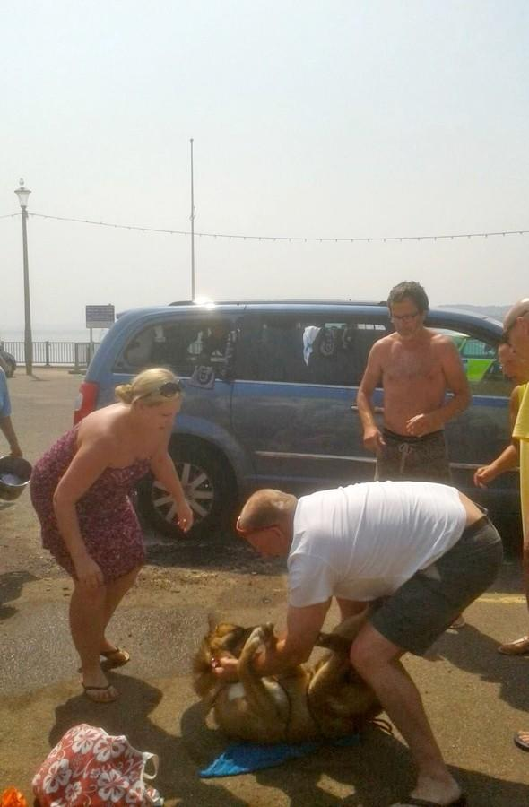 Dog rescued from searing hot car in Devon after setting off alarm
