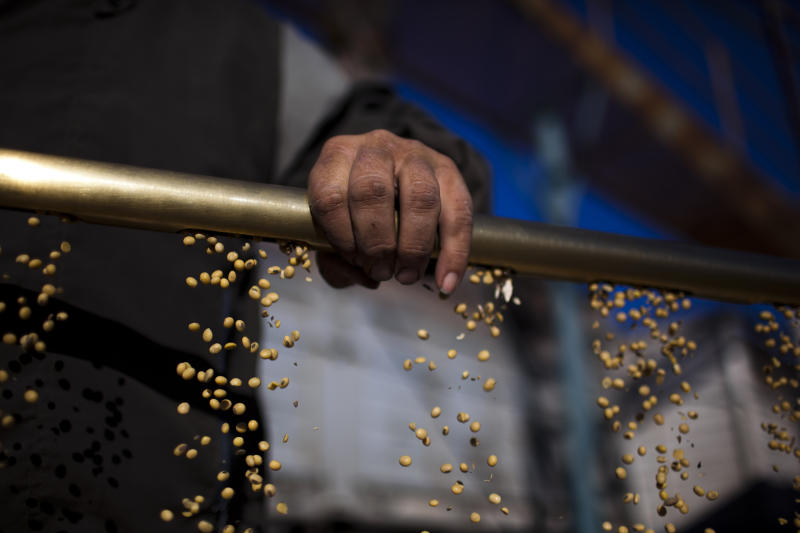 In this July 14, 2012 photo, farmer Raul Medina takes soybeans out of a tube to test its moisture before transporting it for sale at a farm near Pergamino, Argentina. China is the leading buyer of Argentine soybeans, with most of the country's fertile land nowadays covered with the crop, its principal export. As Chinese ate more pork, fried chicken and hamburgers, increasing the demand for soybeans to make cooking oil and feed for pigs and cows, cattle ranchers in Latin America turned grazing land into fields of soy, a crop few in their region consume. (AP Photo/Natacha Pisarenko)