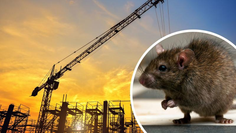 Pictured: Rat, cranes during sunset. Images: Getty