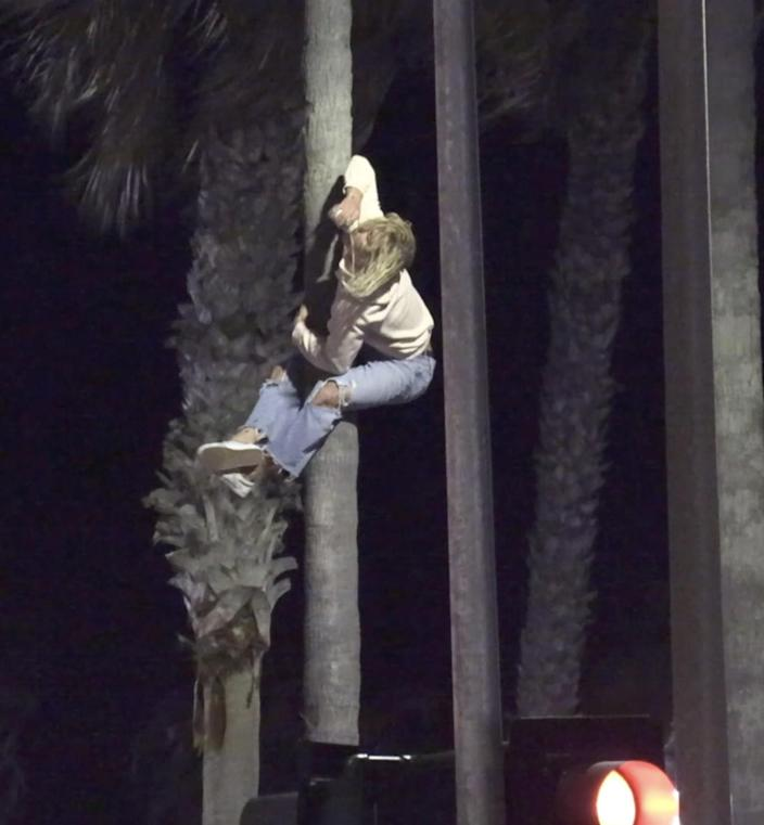 Kickback attendees scaled palm trees and flag poles and leapt from the pier.