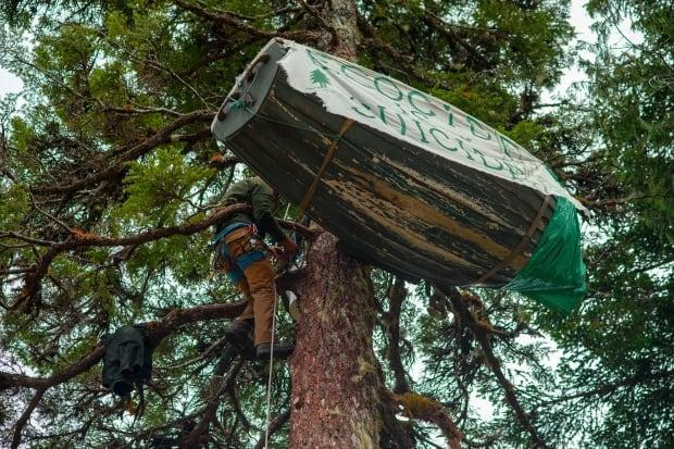 An activist known as Lou gets ready to defy an court injunction near Port Renfrew on Vancouver Island by sitting in a dory in a tree on Sunday May 30, 2021.
