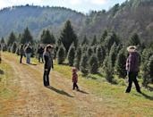 """<p><strong>Hillsville, Virginia</strong> (November 28-December 25)</p><p>Providing full-service preparation of your Christmas tree, <strong><a href=""""http://www.reedisland.com/RIF/rif.htm"""" rel=""""nofollow noopener"""" target=""""_blank"""" data-ylk=""""slk:Reed Island Farm"""" class=""""link rapid-noclick-resp"""">Reed Island Farm</a> </strong>doesn't stop there. The Christmas Shop boasts ornaments, homemade bread, and free hot drinks to sip on during your visit. </p>"""