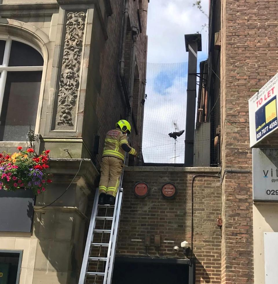 Firefighters rescued the trapped gull from Cardiff city centre (RSPCA/PA)