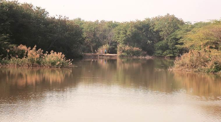 Sukhna Lake, catchment areas in Sukhna Lake, chandigarh city news, punjab and haryana high court