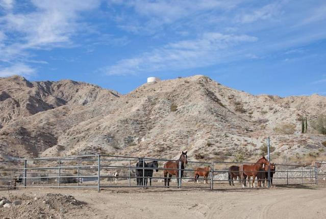 <p>California's famous Joshua Tree National Park is only 30 minutes away and the Big Morongo Wildlife Preserve is even closer. (Airbnb) </p>