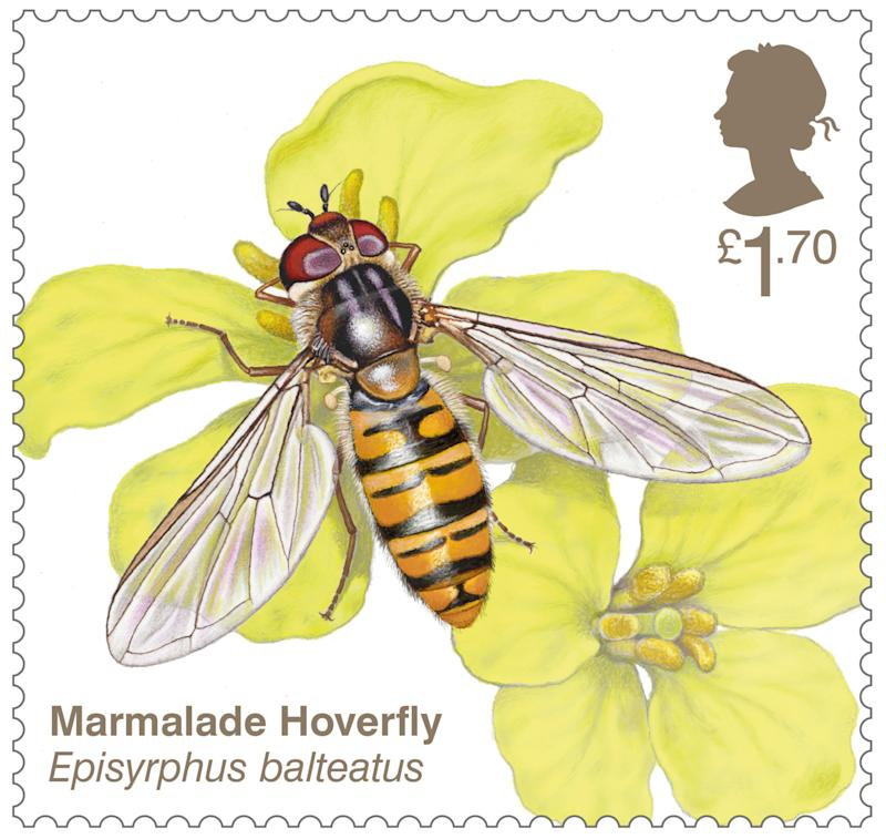 Marmalade hoverfly stamp