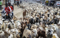 """A herd of goats walk through the streets ahead of the Muslim Eid al-Adha holiday, at Kiamaiko market in the Huruma neighborhood of Nairobi, Kenya Monday, July 19, 2021. Muslims traditionally mark Eid al-Adha, or """"Feast of Sacrifice"""", by slaughtering sheep or cattle and distributing part of the meat to the poor, to commemorate the willingness of the Prophet Ibrahim (Abraham to Christians and Jews) to sacrifice his son. (AP Photo/Brian Inganga)"""