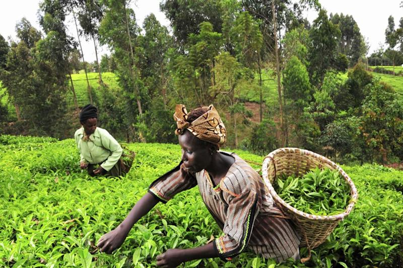 Green revolution: AI helps identify crop disease with a simple smartphone