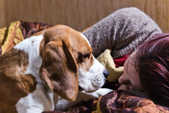 Canine Comfort: Do Dogs Know When You're Sad?
