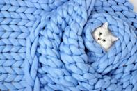 <p>An adorable cat and a huge chunky knit blanket? We just want to dive right into this photo. </p>