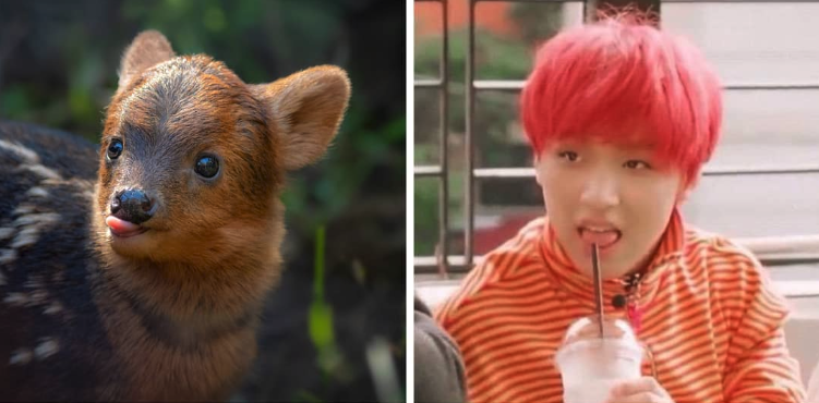 A baby pudu is being named after Haechan. (Photo: Instagram lazoo)