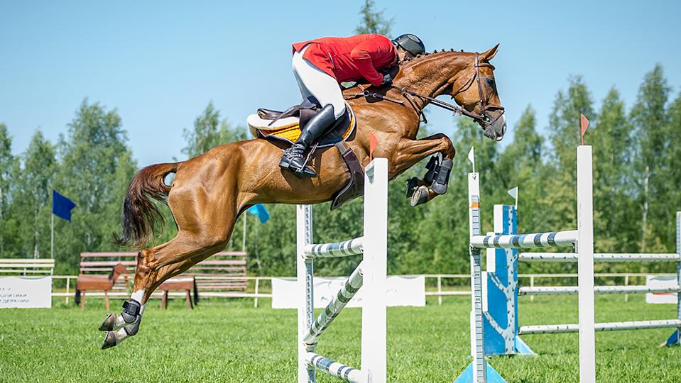 The rider on the show jumper horse overcome high obstacles in the arena for show jumping on background blue sky