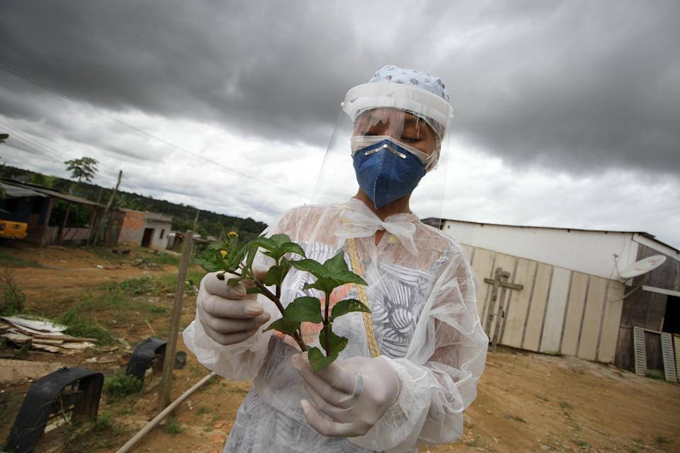 """An indigenous nurse shows a plant locally known as """"Jambu"""", which is used in indigenous communities to treat pneumonia. (Getty Images)"""
