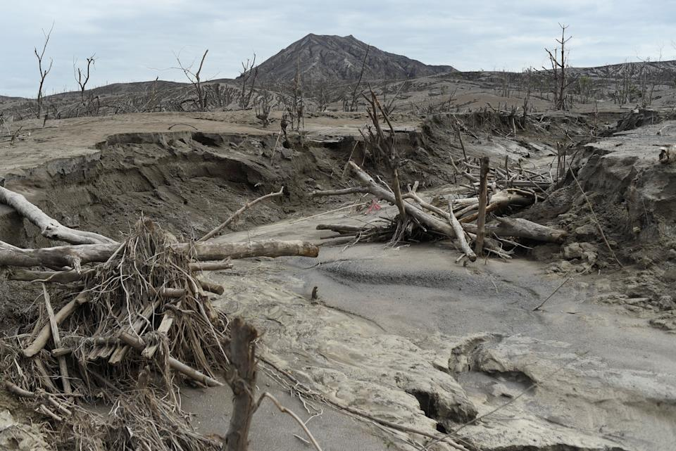 FILE PHOTO: Damaged trees are seen covered with ashes at the Taal Volcano island, a year after the volcano erupted, in Batangas on January 12, 2021. (Source: REUTERS/Lisa Marie David)