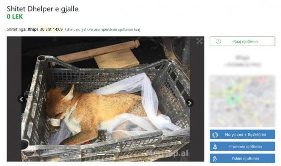 A live fox with its mouth taped up advertised for sale (Four Paws)