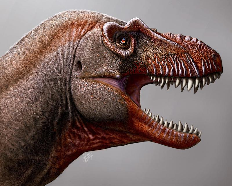 An artist's impression of the newly discovered 'Reaper of Death' dinosaur (Picture: Julius Scotonyi/Royal Tyrrell Museum)