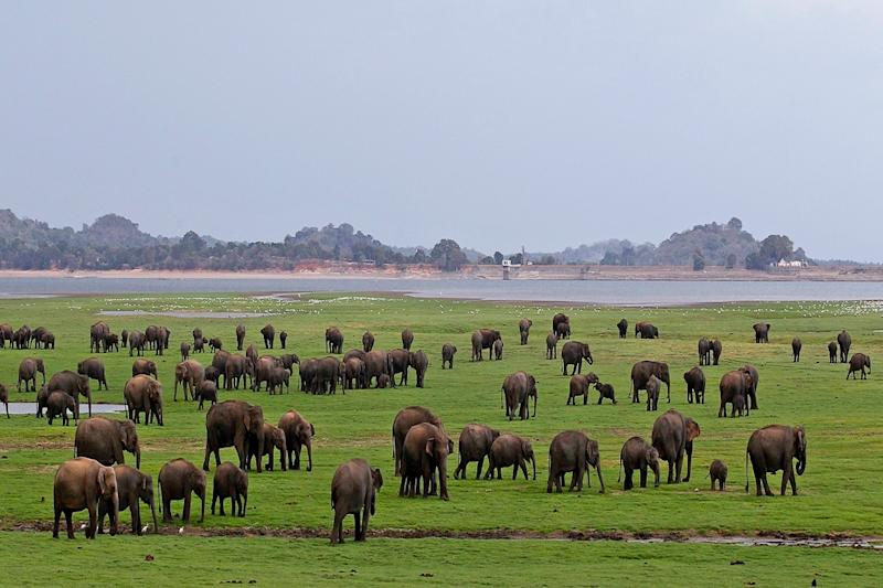 Sri Lanka to Let Tourists Enjoy the Best of Wildlife Experience Sitting at Home
