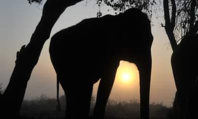 Killer Elephant Hunted As Four Villagers Die
