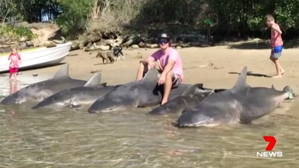Commercial fisherman Billy Brislane caught five bull sharks in a popular camping spot at Macleay River on the NSW Mid North Coast.