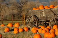 <p>Establishing traditions is important early in relationships, and the fall is filled with opportunities for romantic dates that can turn into annual festivities, explains House. Additionally, since pumpkin patches are full of families, it's a natural segue into discussing children to see if you're on the same page (or far past that point). Bonus: After you visit the patch, you can retreat to peace and quiet and decorate the pumpkins together.</p>