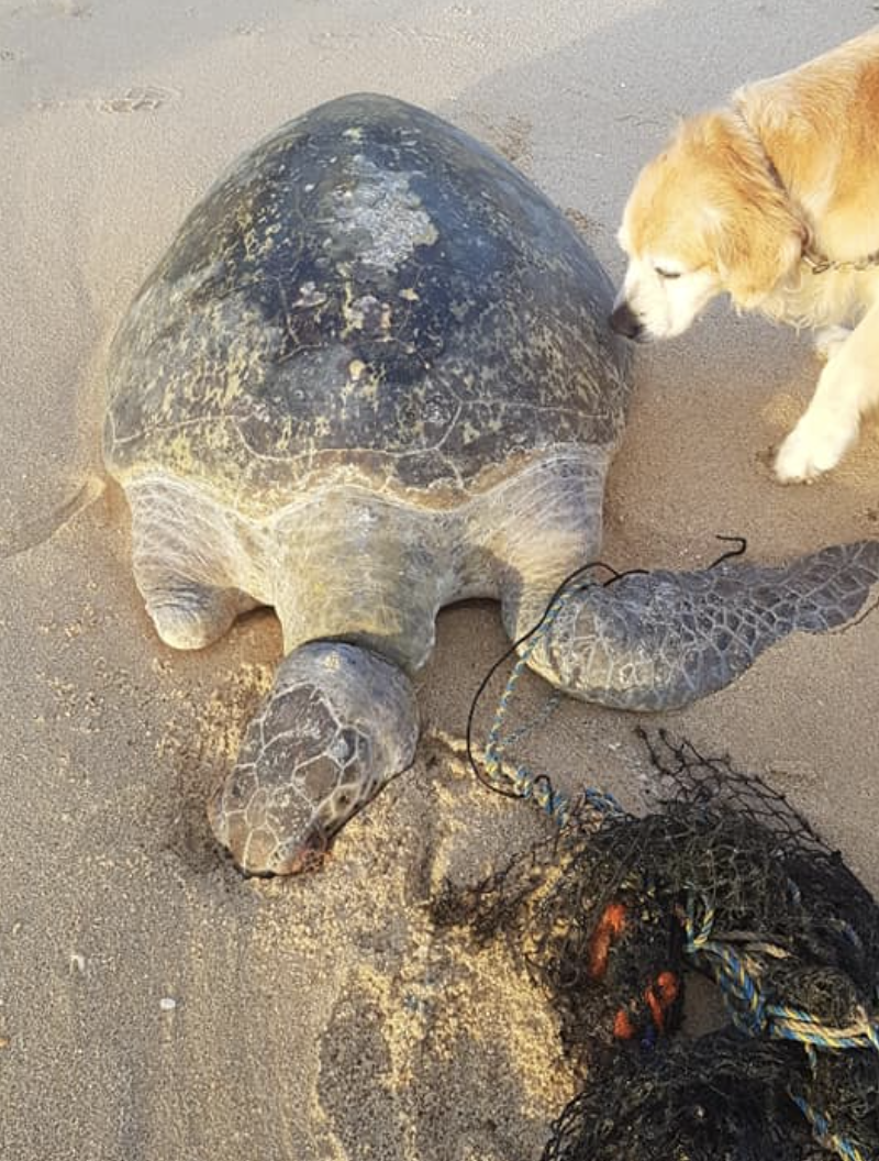 This turtle washed up on Woodgate beach dead. Source: Facebook