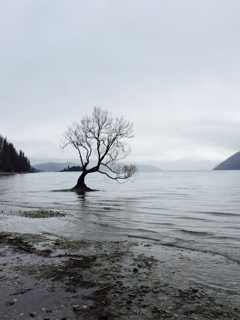 Make a trip to see the famed Wanaka Willow. Photo Be