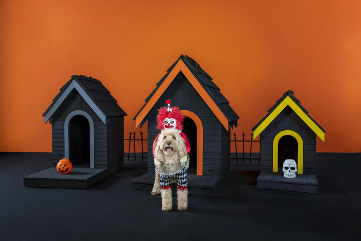 Pets looking to instill fear into their foes can opt for a spooky clown costume from PetSmart's 2021 Halloween collection.