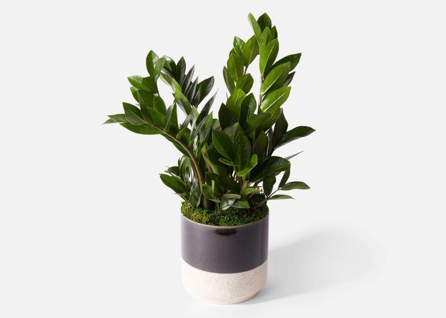 """<p><strong>subscriptions</strong></p><p>urbanstems.com</p><p><strong>$75.00</strong></p><p><a href=""""https://go.redirectingat.com?id=74968X1596630&url=https%3A%2F%2Furbanstems.com%2Fproducts%2Fplants%2Fthe-bosco%2FNF-K-00022.html&sref=https%3A%2F%2Fwww.prevention.com%2Flife%2Fg27760489%2Fbest-last-minute-fathers-day-gifts%2F"""" rel=""""nofollow noopener"""" target=""""_blank"""" data-ylk=""""slk:Shop Now"""" class=""""link rapid-noclick-resp"""">Shop Now</a></p><p>This ZZ plant in a dad-friendly planter comes with overnight shipping, meaning that even the worst planners can still gift Dad something sophisticated and unique—not to mention easy to look after.</p>"""
