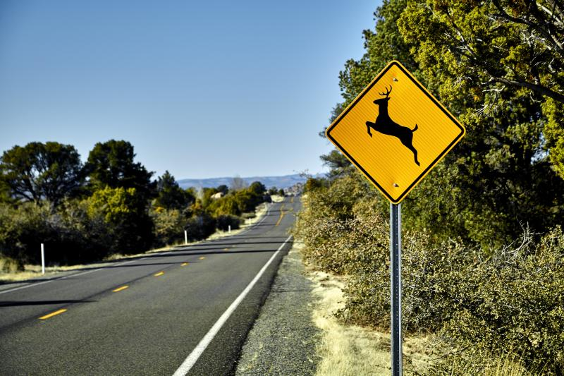 California Law Makes It Legal to Collect and Eat Roadkill