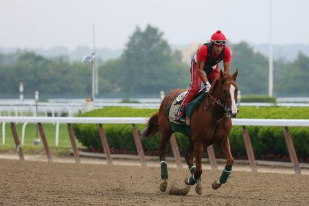 Jun 4, 2014; Elmont, NY, USA; California Chrome ridden by exercise rider Willie Delgado jog the track during workouts in preparation for the 2014 Belmont Stakes at Belmont Park. Anthony Gruppuso-USA TODAY Sports