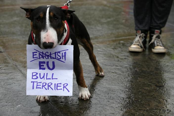 A Bull Terrier holds a sign in his mouth at an anti-Brexit protest in Trafalgar Square in central London on June 28, 2016 (AFP Photo/Justin Tallis)