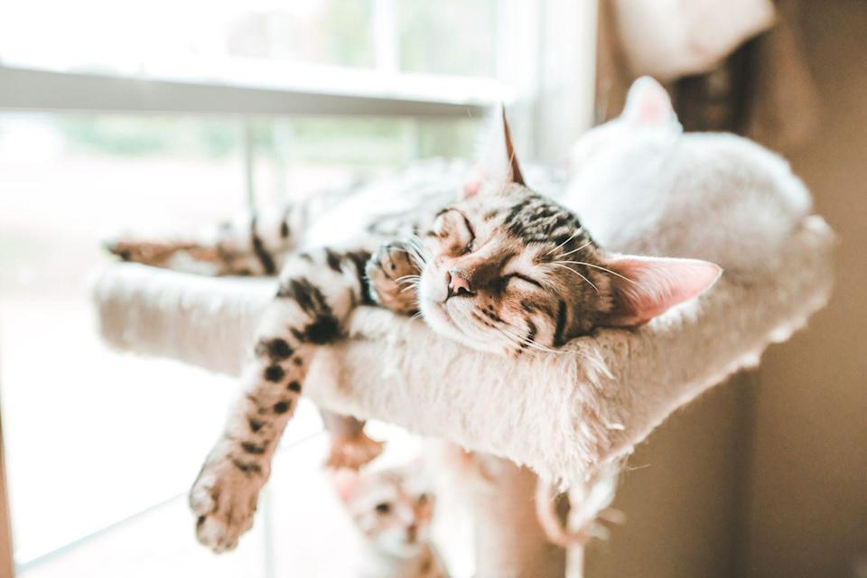 <p>It truly does not get cuter than a cat in a very deep sleep in an extremely comfortable position. </p>