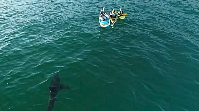 Photographer Carlos Gauna captured this drone image of a shark swimming near people on floatation devices off the California coast.