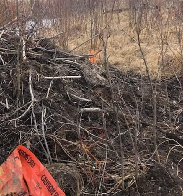 A spokesperson for Telus said fibre marking tape, usually buried underground,could be seen on top of the beaver dam.
