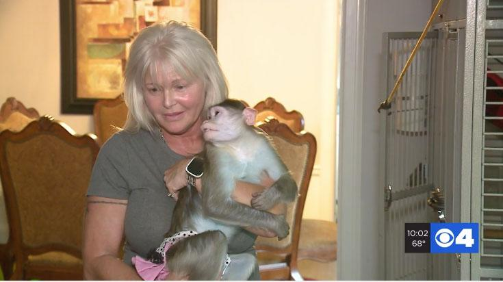 A Missouri woman, Texanne McBride-Teahan, faces losing her emotional support animals because they are monkeys. (Photo: KMOV)