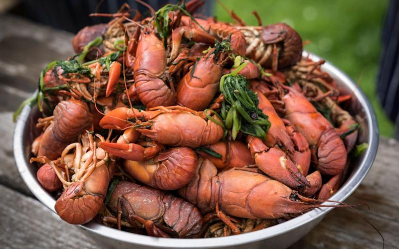 Crayfish are a guilt-free alternative to lobster and prawns, Lord Randall has said - Andrew Crowley