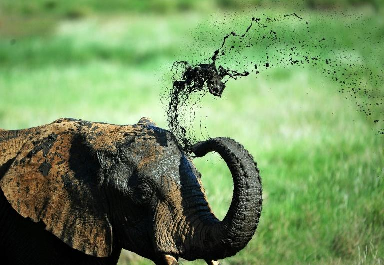 A large majority of countries voted in Geneva to ban the transfer of elephants caught in the wild to zoos