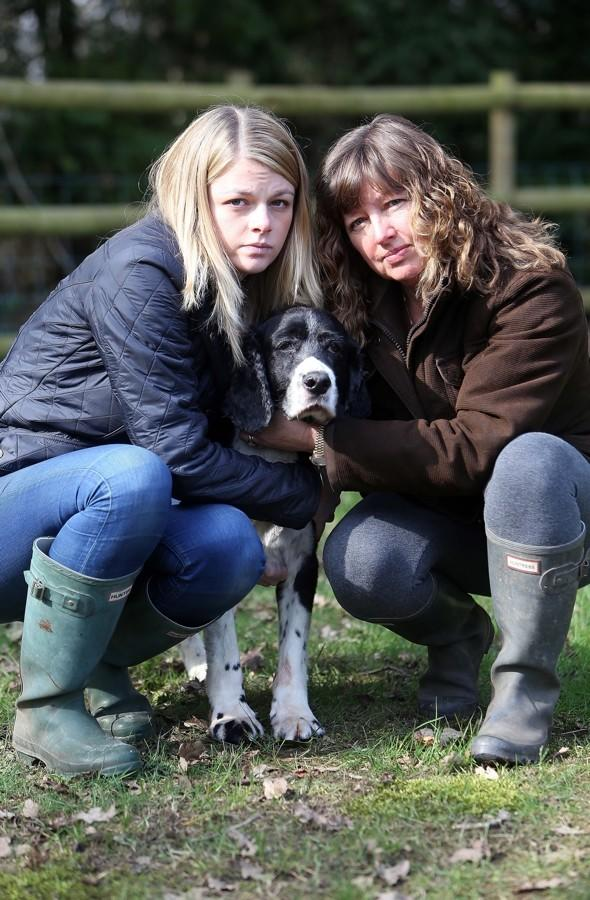 Walkers and tourists warned over 'deadly toxin' killing dogs in New Forest