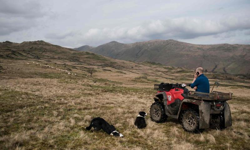 Farmer on a quad bike on phone, with two border collies.