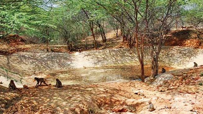 The city's only wildlife sanctuary, Asola Bhatti near Tughlaqabad, is no more a repository of the ridge's natural fauna like jackals, hyenas and leopards.
