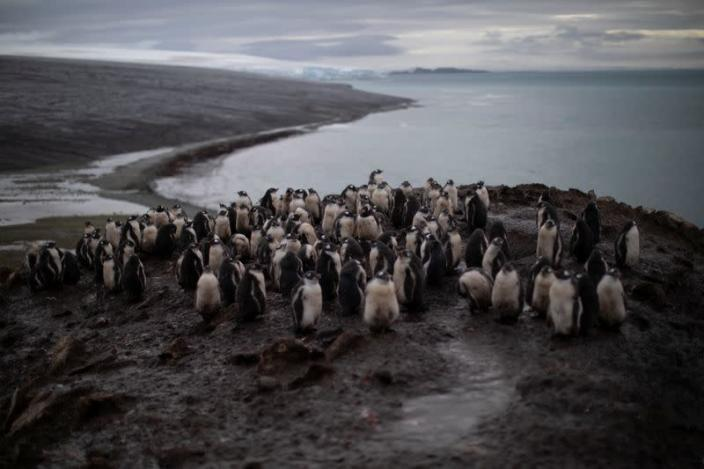 The Wider Image: On board the Antarctic expedition that reveals dramatic penguin decline