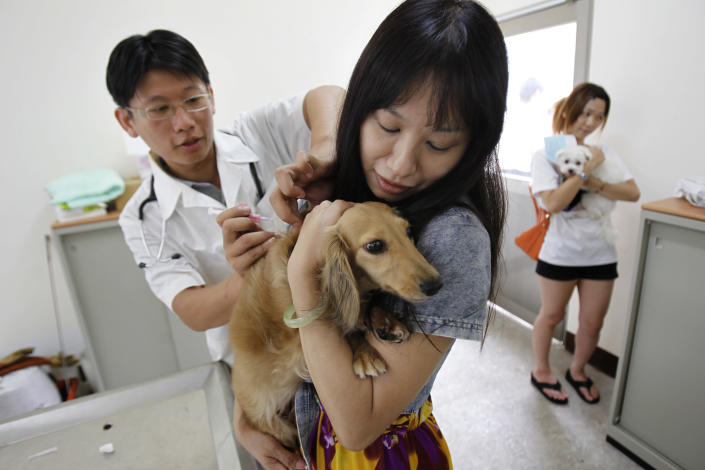 A dog owner get her pet vaccinated for rabies at a government clinic in Taipei, Taiwan, Thursday, Aug. 1, 2013. Taiwan has ordered tens of thousands of vaccine doses to protect people against the island's first rabies outbreak in more than 50 years. (AP Photo/Wally Santana)